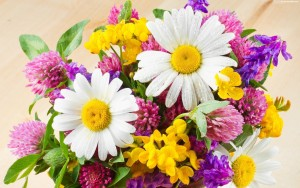 bukiet-kolorowych-polnych-kwiatow